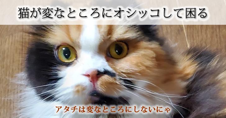 猫が変な所にオシッコして困る