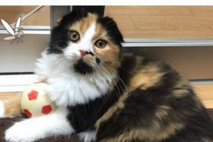 猫のフィラリア予防にレボリューションと同じ成分で安い値段の薬がおすすめ!